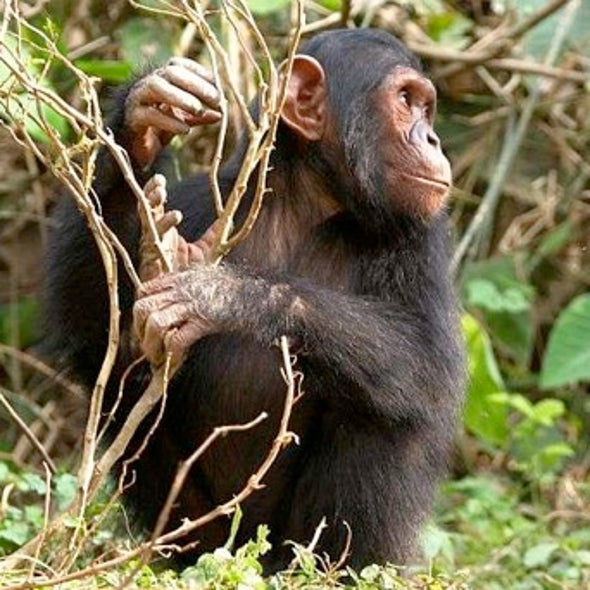 Jane of the Jungle: Additional Commentary and Insights from Jane Goodall