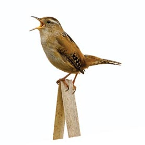 Your Birdsong Stays on My Mind