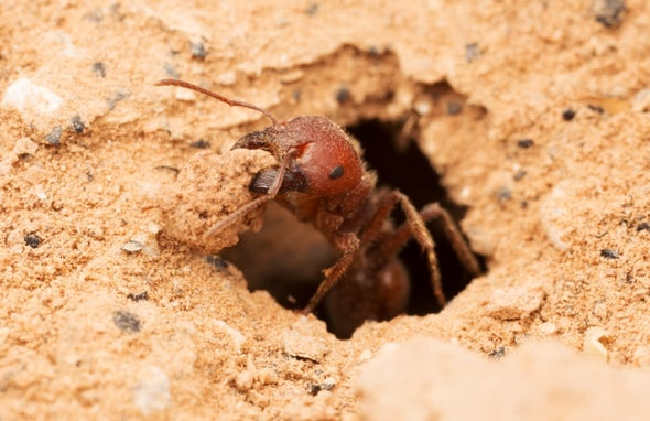 Ants May Boost CO2 Absorption Enough to Slow Global Warming