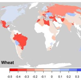 Cereal Killer: Climate Change Stunts Growth of Global Crop Yields