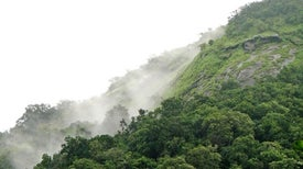 Indigenous Rights to Forests Catch More Carbon