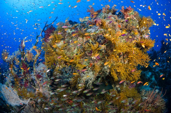 Mass Coral Death Drives Efforts to Identify Resilient Reefs