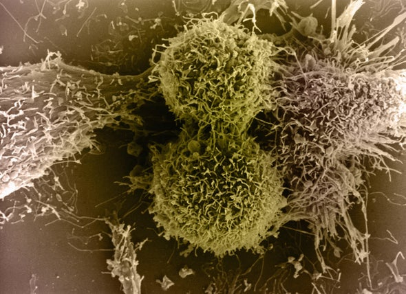 Early Coronavirus Immunity Data Fuel Promise for a Vaccine