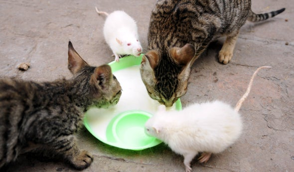 Cats May Have Duped Us about Being Great Rat Catchers