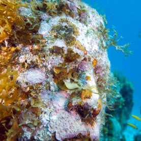 coral growing on sculpted face