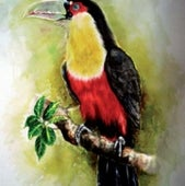 """A RED-BREASTED TOUCAN"":"