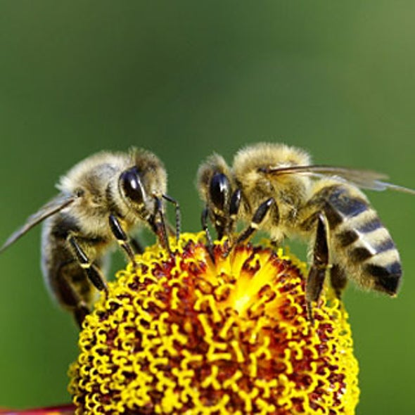 Monogamy Is Responsible for the Evolution of Bees