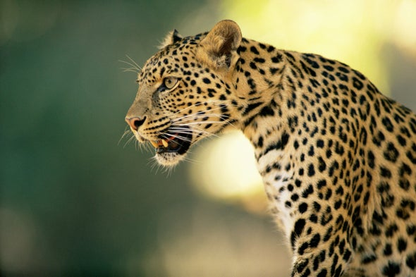 Toll-Free Number Stems Human–Wildlife Conflicts