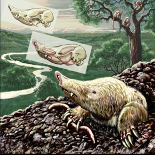 Mystery Mammal Survived Dino Extinction