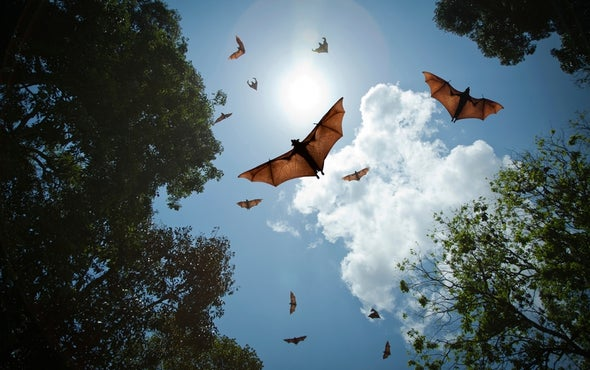 Geneticists Hope to Unlock Secrets of Bats' Complex Sounds