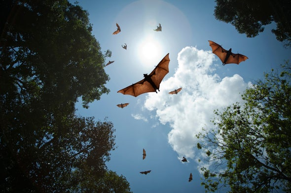 Geneticists Hope to Unlock Secrets of Bats' Complex Sounds