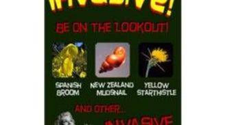 What's Invasive!