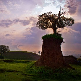 tree stump in North-Western Ethiopia
