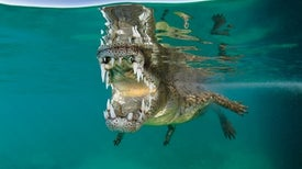 How Crocs Came to Rule the Water's Edge