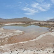 Rains Bring a Microbial Massacre to Chilean Desert