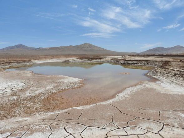 Rains Bring a Microbial Massacre to Chilean Desert