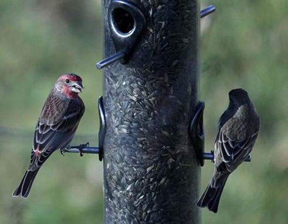 Bird Feeders Attract Bird Eaters, Too