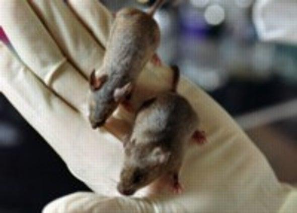 Missing Gene Makes Mice Lean