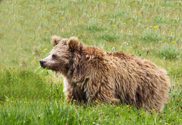 Yeti Claims Don't Bear Up
