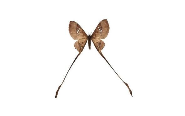 Moths Evade Bats with Slight of Wing