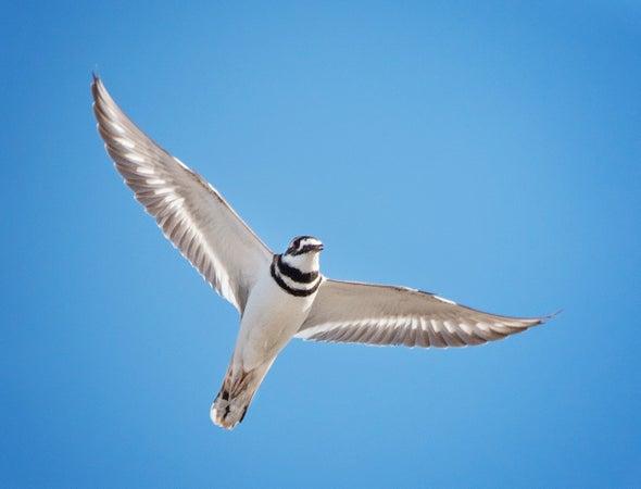 A Major Migratory Bird Habitat Is in Danger