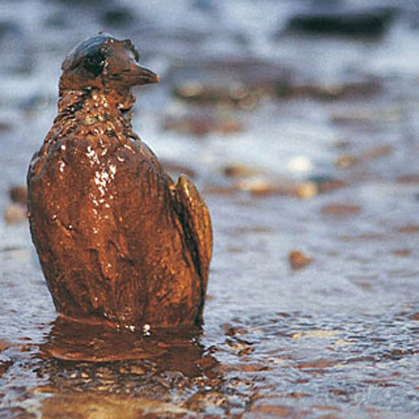 Oil Spills, the Media and the Oil Industry