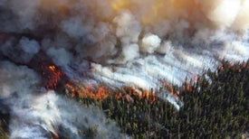 More Wildfires Burning More Forest May Become the New Normal