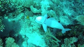 An Agile Robotic Fish Swims into New Waters