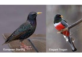 Birdsnap confusion