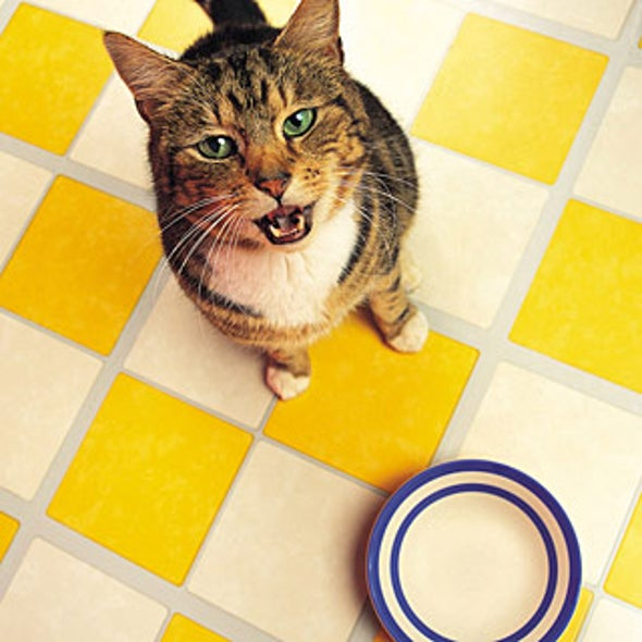 Veggie Cat Food Why Not All Cats Need Meat Scientific American